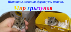 Мир грызунов - сайт любителей грызунов, партнер форума Грызуша